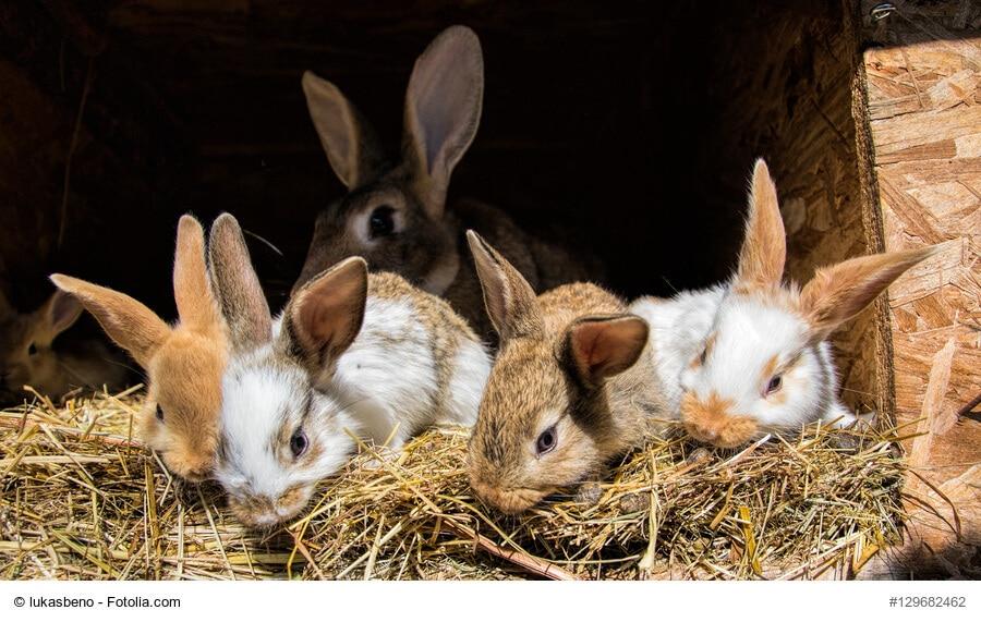 Fünf kleine Kaninchen mümmeln an trockenen Ästen und Heu