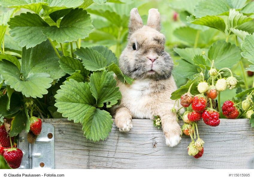 kaninchenfutter alles rund um kaninchen ern hrung haustiermagazin. Black Bedroom Furniture Sets. Home Design Ideas