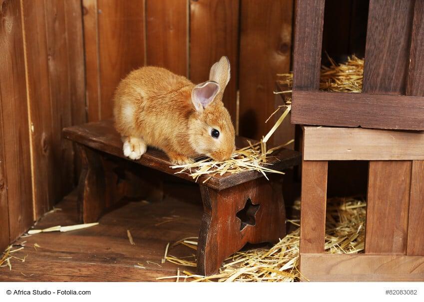 Braunes Kaninchen sitzt auf seinem Häuschen im Stall