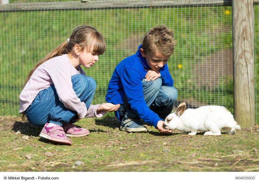 Kinder, Mädchen und Junge, füttern ein weißes Kaninchen