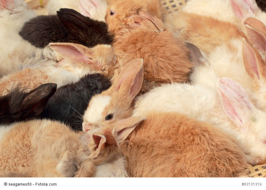 Kaninchenbabies kuscheln sich aneinander