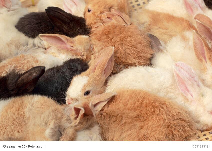 Braune, schwarze und weiße Kaninchen zusammen in einer Gruppe