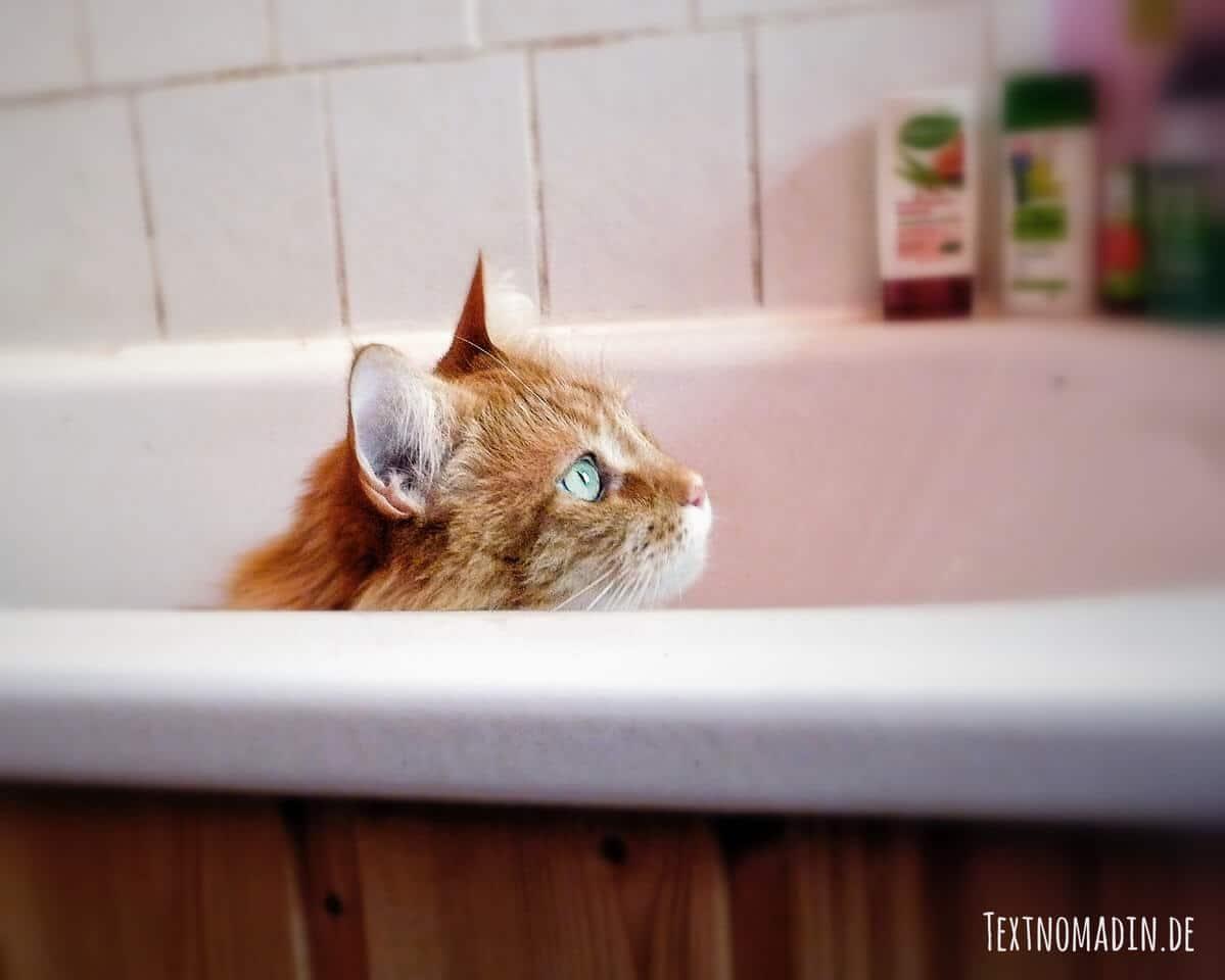 Hygieneregeln bei kranken Katzen