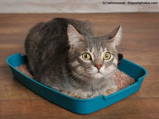 Durchfall bei Katzen und was Du dagegen tun kannst