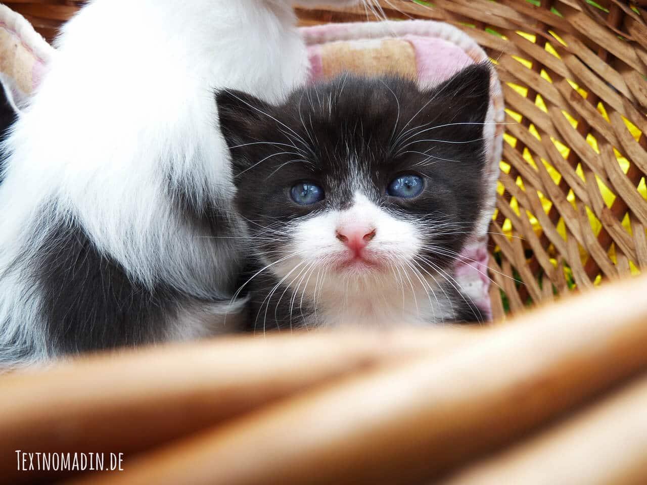Durchfall gefährlich für junge Katzen