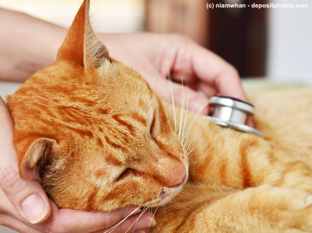 Bei Katzen mit starkem Durchfall muss der Tierarzt helfen