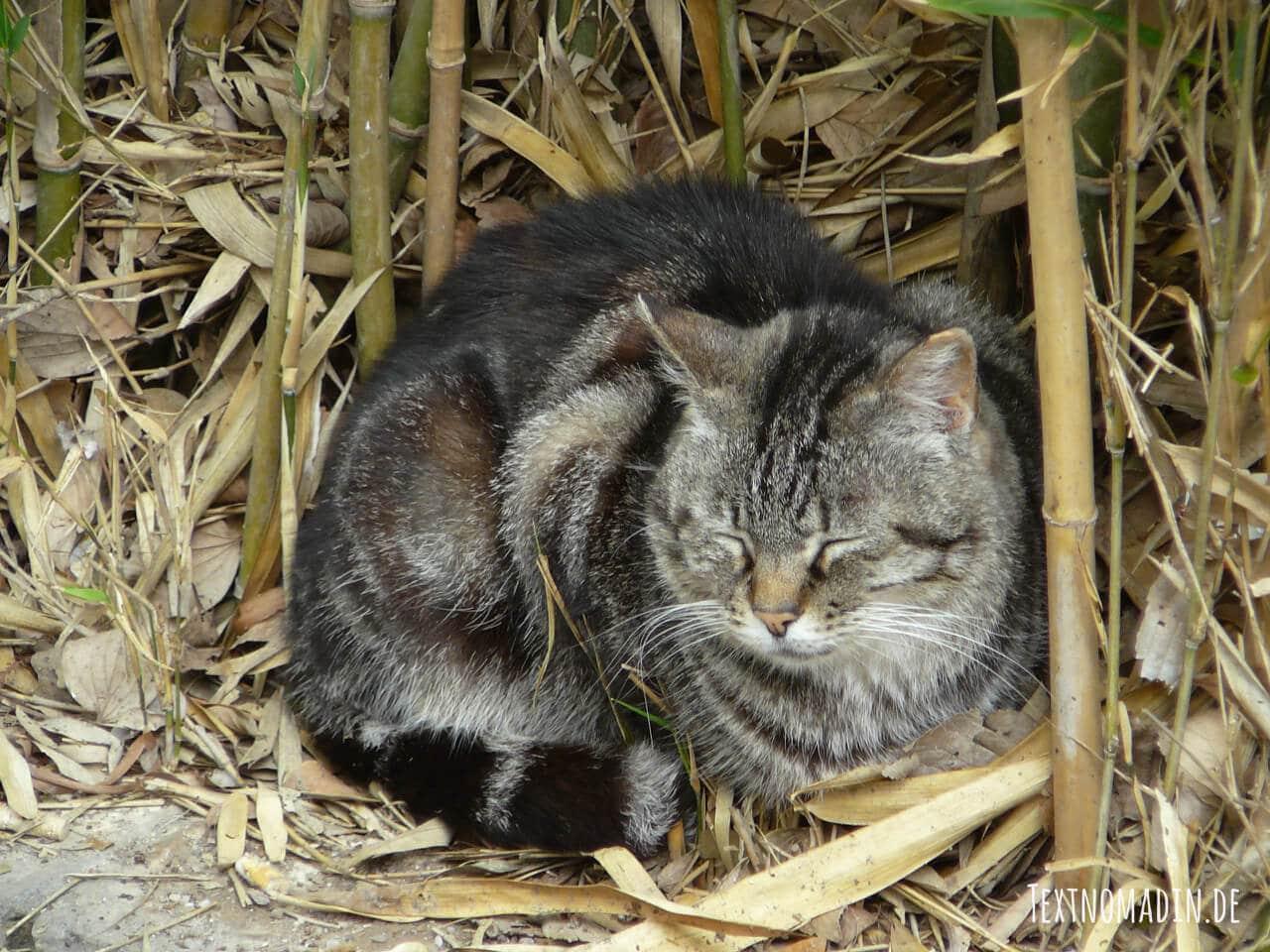 Freigänger Katze krank
