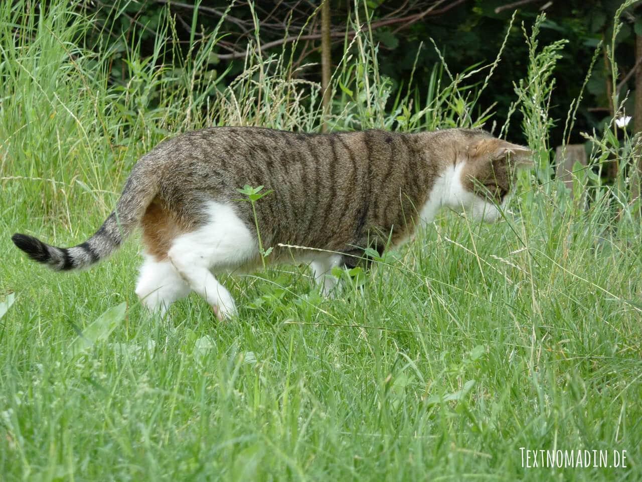 Freigänger Katzen haben viel mehr Möglichkeiten sich auszulasten