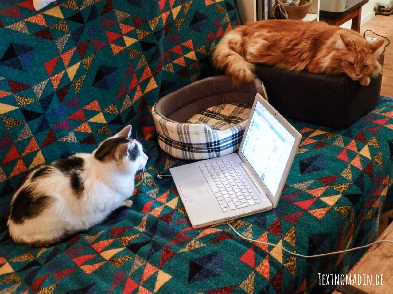 Zwei Katzen liegen aus dem Sofa und beobachten den Laptop
