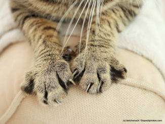 Katze kratzt an Möbeln