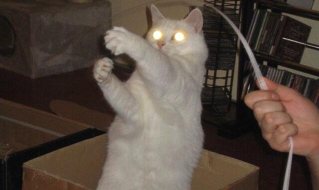 Weißer Kater greift mit leuchtenden Augen und ausgefahrenen Krallen nach einer Schnur
