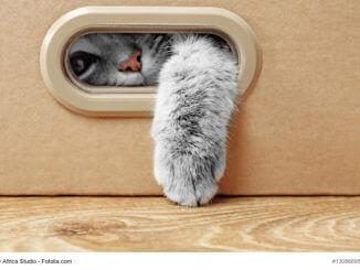 Katzen Fummelbrett selber bauen
