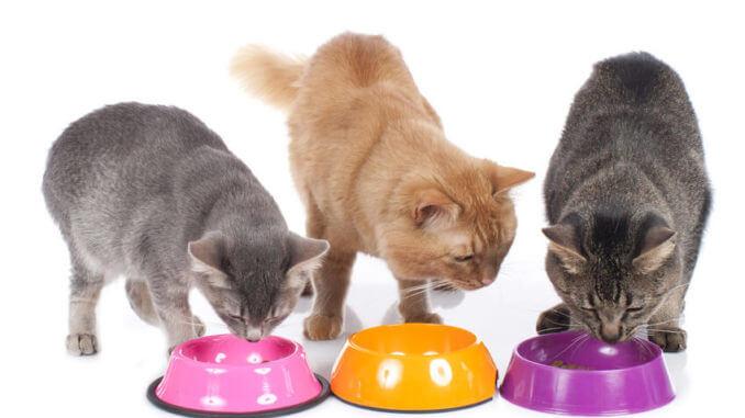 Fütterungsart Katzen - Welches Futter ist das Beste?