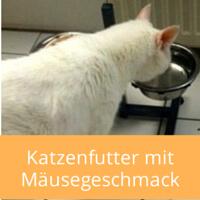 Katzenfutter-maeusegeschmack
