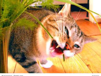Katzengras- für die Gesundheit eurer Stubentieger