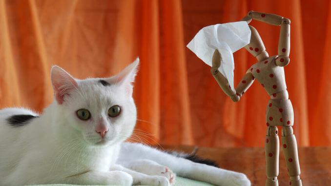 Katzenhaarallergie, Infos für Betroffene