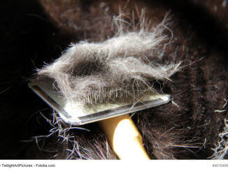 Einfach Katzenhaare entfernen Tipps