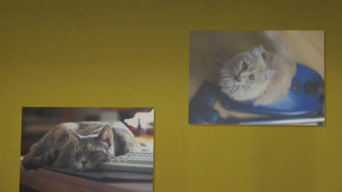 Katzenliterarischer Abend mit Ausstellung der Gewinnerbilder von Kater Pauls Fotowettbewerb
