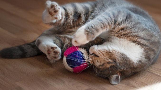 Katze Spielzeug mit Katzenminze