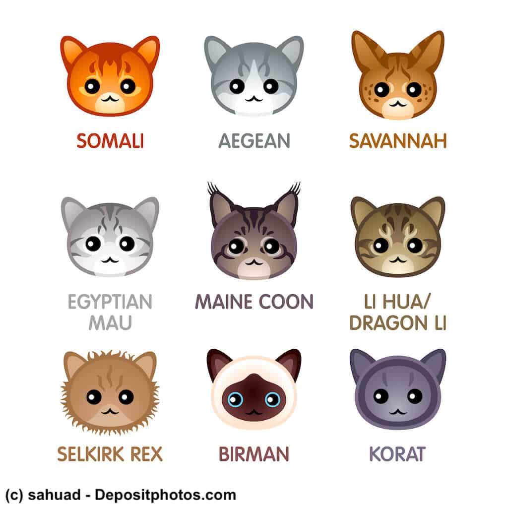 Katzenrassen im Vergleich