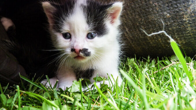Kitten auf der Wiese