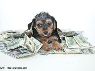 Ein Welpe sitzt in einem Haufen Geldscheinen
