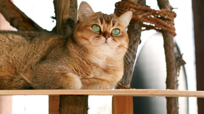 Katzenmöbel Kratzwürfel für Katzen selber bauen - Anleitung