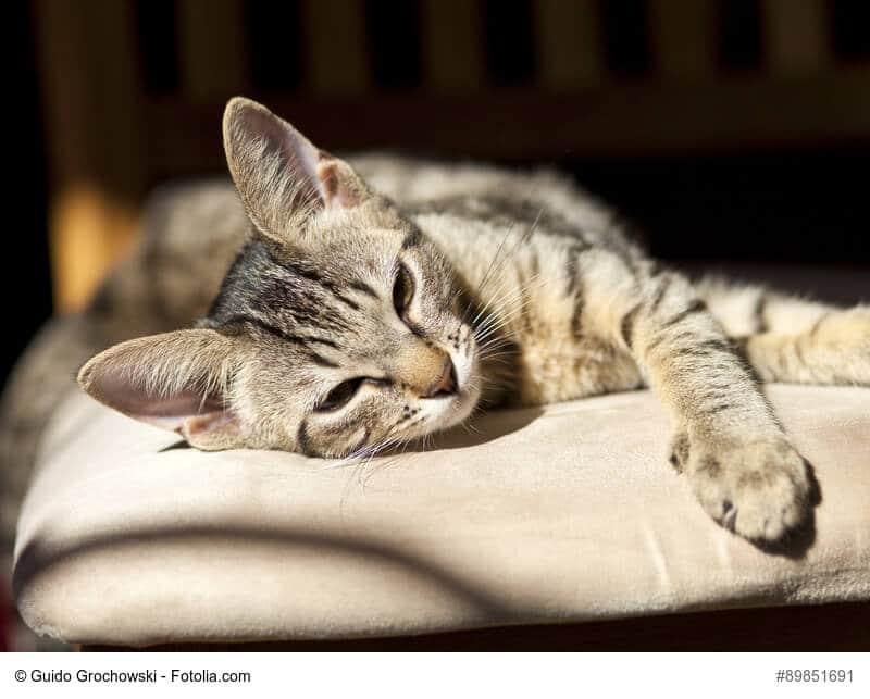 Kuschelkissen für Katzen selber nähen