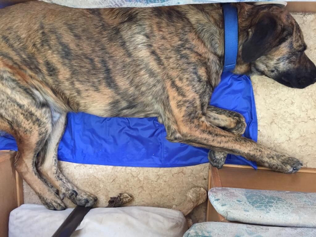 Kühlmatte für Hunde von AniOne in einem Wohnmobil mit einem großen Hund darauf liegend.