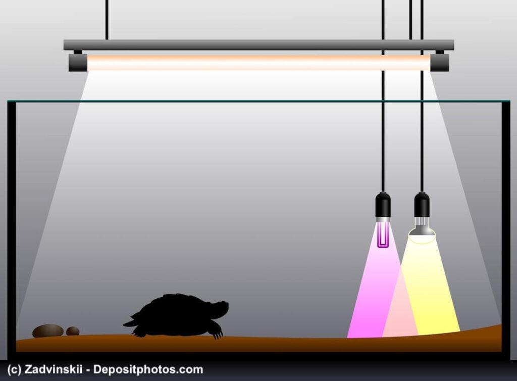 Grafik eines Terrariums mit einer Schildkröte und Wärmelampen