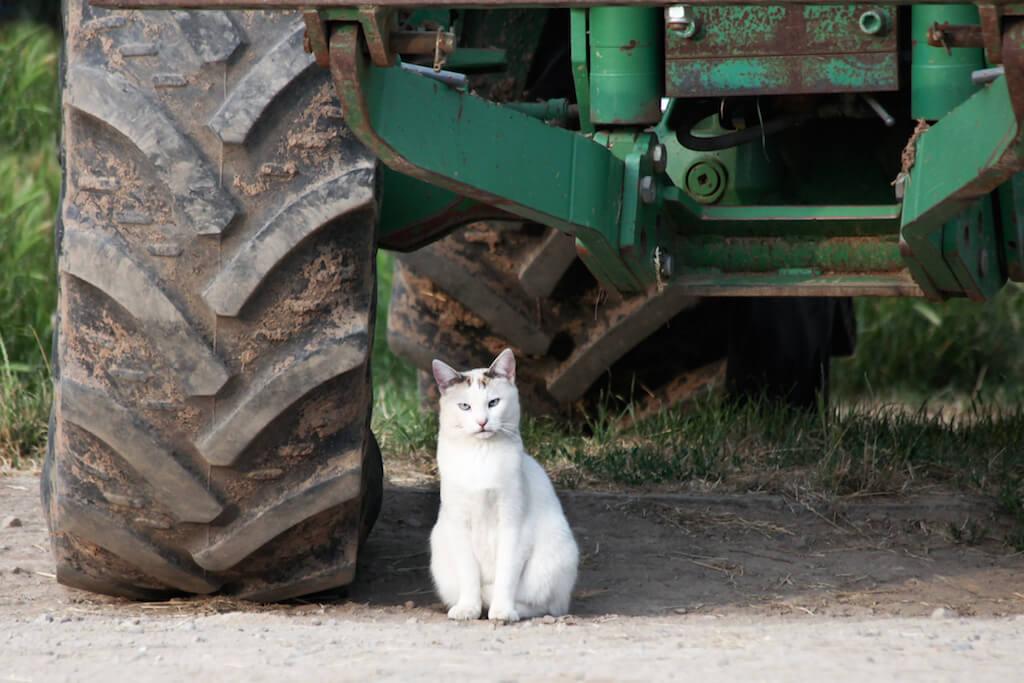 Das Siegerfoto zum Thema Katzen und Technik. © Lothar Hensel