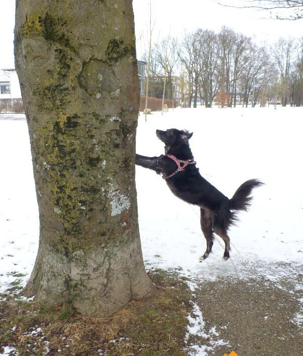 Ein Hund versucht einen Baum umzuschubsen