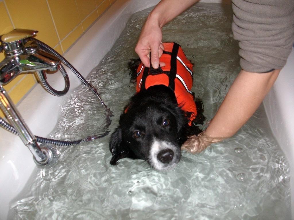 Hund Marbo während seiner Schwimmtherapie im Wasser