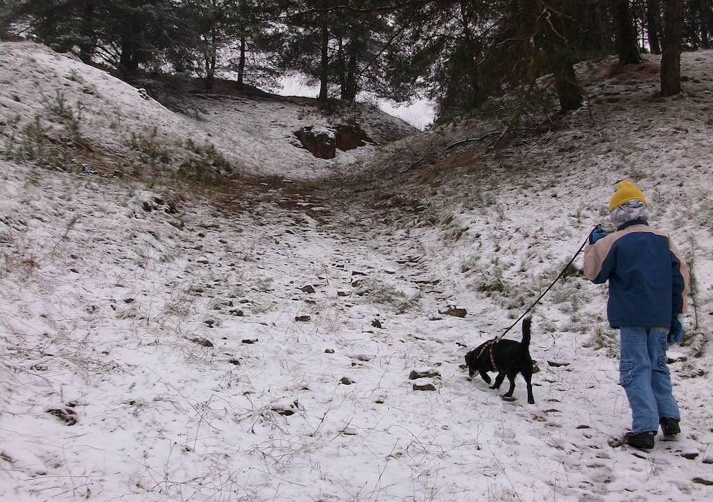 Hund mit schweren Brüchen der Beine läuft heute wieder fast normal durch den Wald