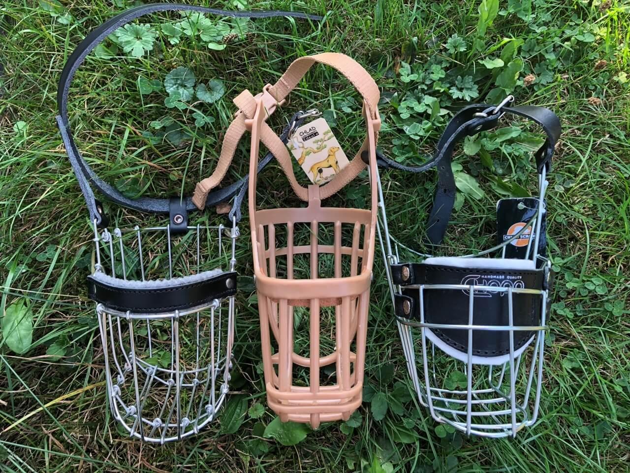 Im Gras stehen ein Maulkorb von Chlad, einer von Baskerville und einer von Chopo nebeneinander und sind von oben fotografiert