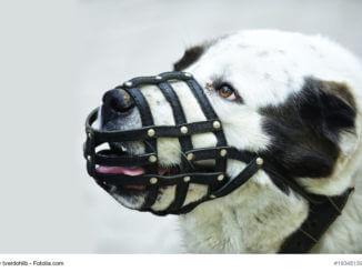 Bild von einem schwarz-weißen Hundekopf mit einem schwarzen Maulkorb aus dünnen Lederriemen.