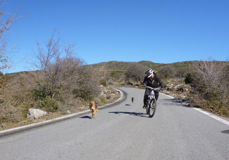 Hund rennt auf einer asphaltierten Straße neben einem Mountainbike her