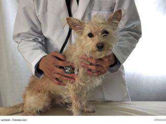 Tierarzttraining: Kleiner heller Mischling sitzt auf der Untersuchungsliege beim Tierarzt