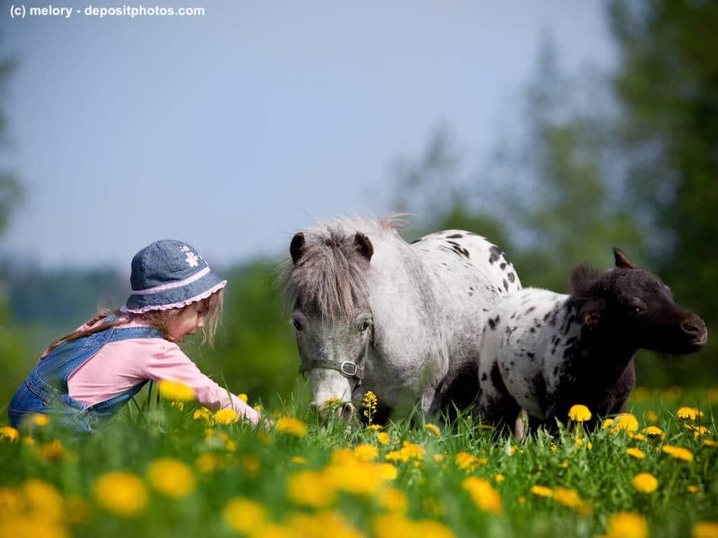 Pferdevollkasko Versicherung Schutz und Leistungen