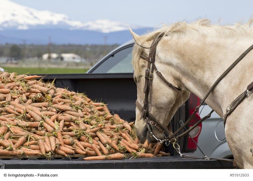 Die richtige Ernährung deines Pferdes siehst Du ihm an