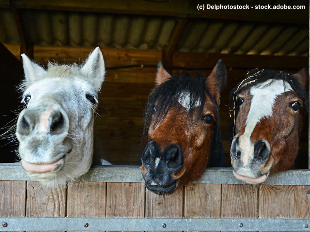 Leistungen und Kosten Pferdevollkaskoversicherung