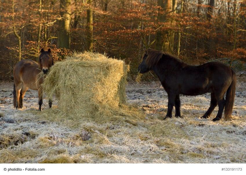 Heu, das Winterfutter für Pferde