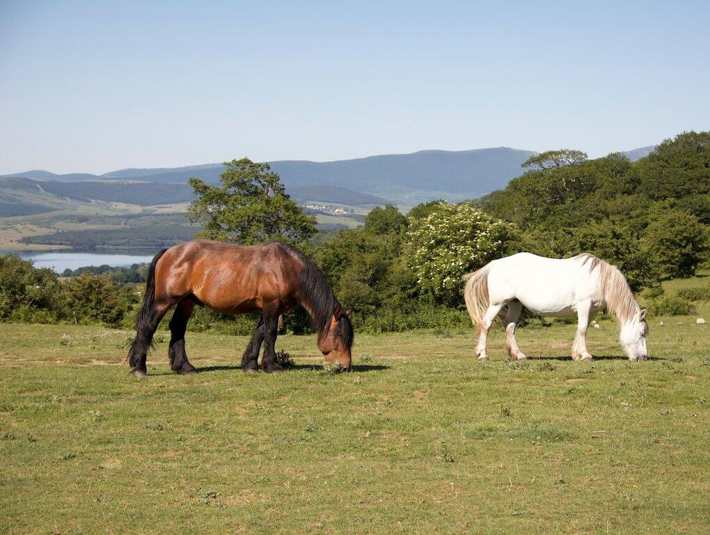 Pferd von der Weide geklaut