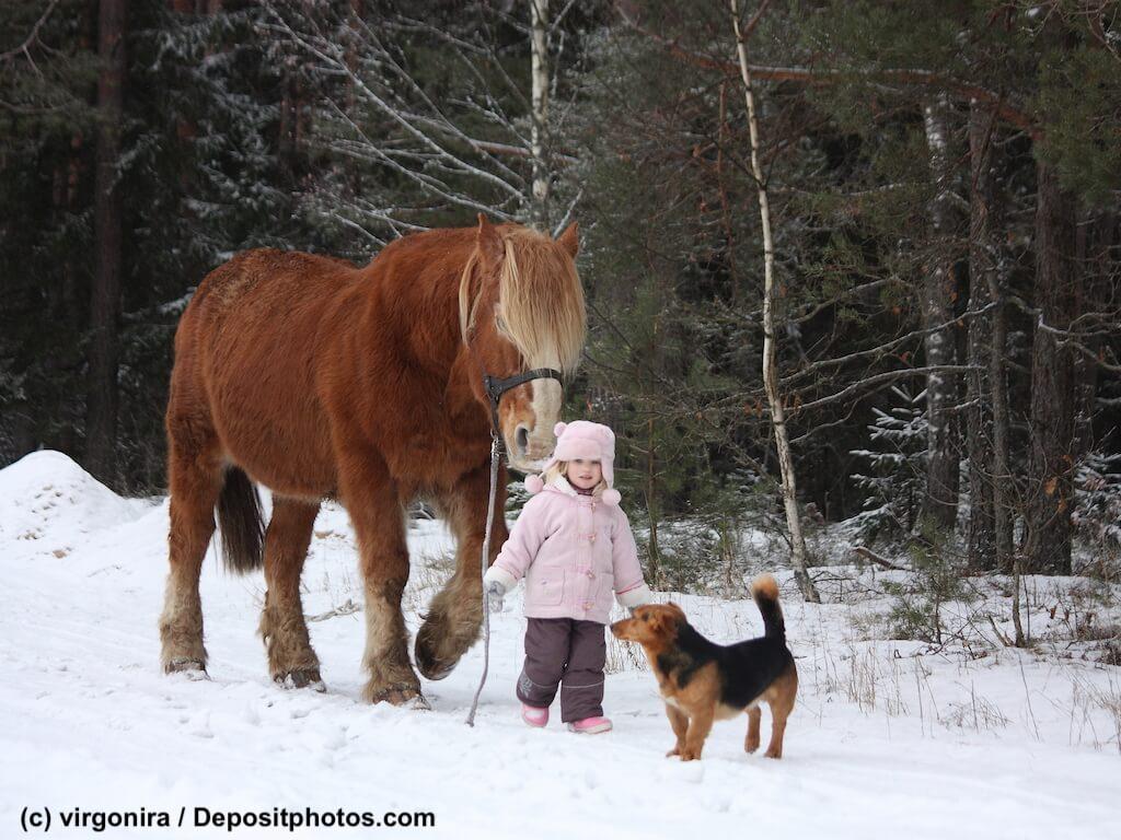 Hilfe wenn das Pferd geklaut wird