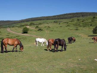 Verschiedene Pferdefarben auf einem Bild: Brauner, Schimmel, Fuchs auf einer Weide
