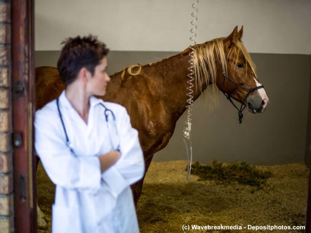Wenn der Tierarzt behandeln muss, wird es meist teuer