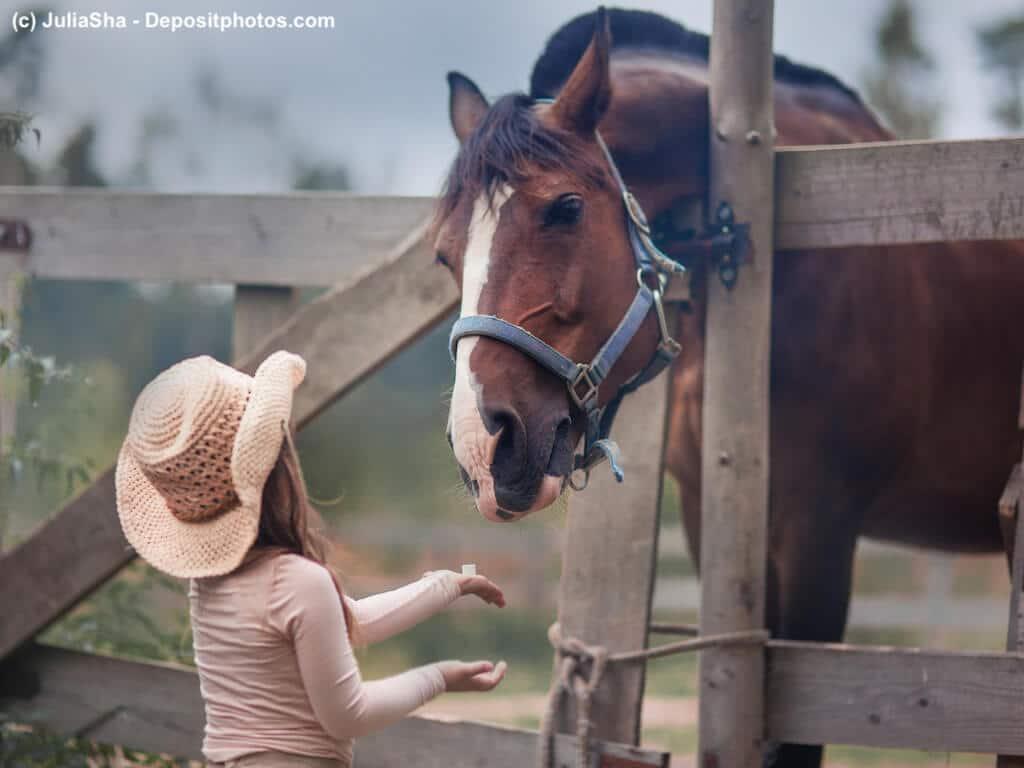 Welche Pferdekrankenversicherung passt am besten zu mir und meinem Pferd?