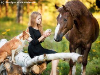 Pferdekrankenversicherung Infos