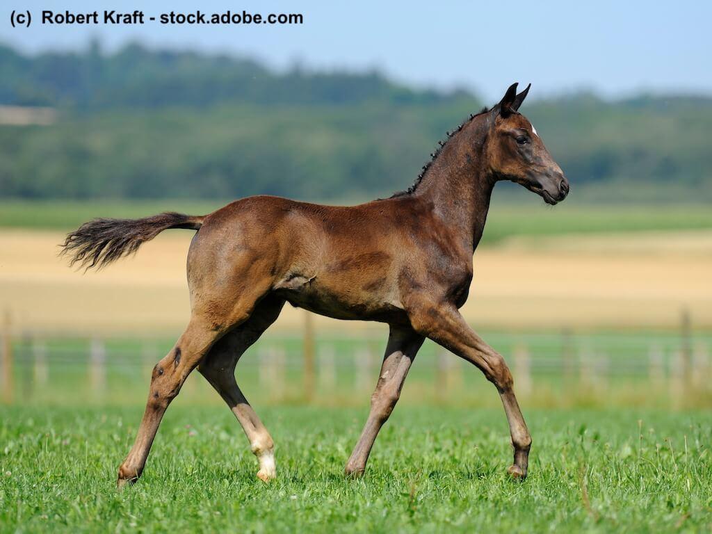 Lebensversicherung für Pferde Fohlen