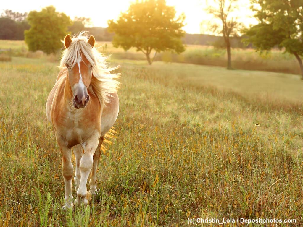 Pferdelebensversicherung und was Du wissen solltest